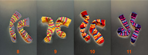 chromosome socks image